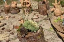 « Un éco-musée » pas comme les autres : atelier sculpture en famille, Clémence CM1 – école Caubrière