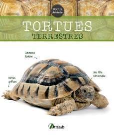 Un guide contenant toutes les informations nécessaires pour choisir, acheter et élever une tortue terrestre. Aborde le comportement, les règles générales de nutrition, la santé et les maladies de cet animal domestique. (Electre)